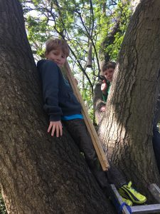 Kids playing outdoors, climbing a tree